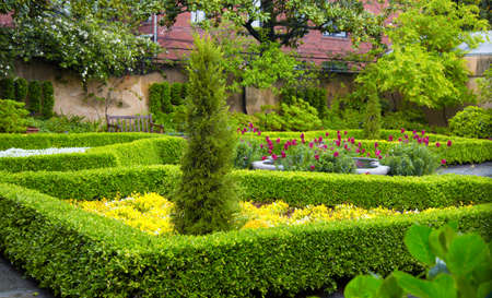 Manicured haedges and trees in a residential garden.