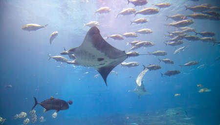 The main exhibit at Atlantas Aquarium featuring numerous shark and fish of all kinds. Stock Photo