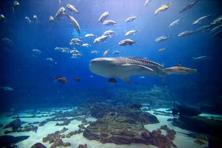 Die Hauptausstellung in Atlanta Aquarium mit zahlreichen Hai und Fische aller Arten.