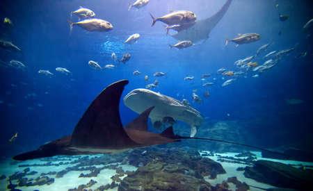 The main exhibit at Atlantas Aquarium featuring numerous shark and fish of all kinds. photo