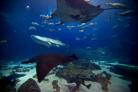 The main exhibit at Atlantas Aquarium featuring numerous shark and fish of all kinds. photo