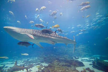Die wichtigsten Ausstellungs bei Atlanta Aquarium mit zahlreichen Hai und Fische aller Art.