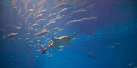 The main exhibit at Atlantas Aquarium featuring numerous shark and fish of all kinds. Reklamní fotografie