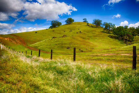 rolling hills: Rolling Green Hills of a ranch outside Fresno, California on bright spring day.