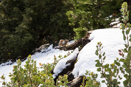 A Squirrel perched on a dead tree in yosemite valley. California