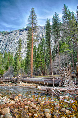 merced: A large tree as it fell into the Mercer River in Yosemite National Park, California.