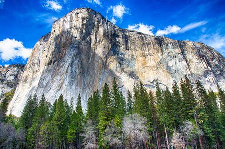 El Capitan góruje nad dnem doliny. Park Narodowy Yosemite, Kalifornia. USA