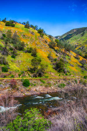 hillsides: California Poppies cover the hillsides and cliffs of the Merced River Canyon in Spring. California, USA