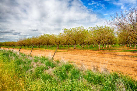Nut groves on the side of the road in Californias Central Valley.