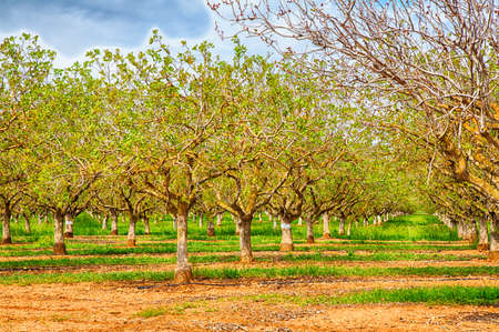 Nut groves on the side of the road in California's Central Valley.