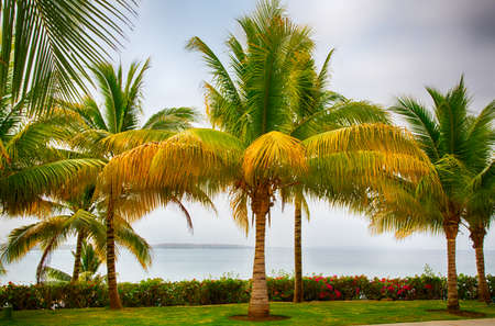 beach front: Palms in front of the Caribbean Sea at a beach front resort.