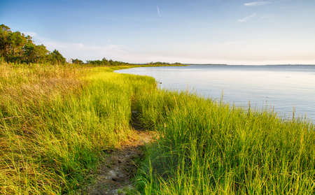 The marshy shores of the Cape Fear River. Fort Fisher Air Force Recreation Area, North Carolina.