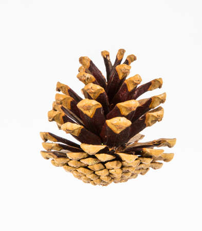 pine cone: A pine cone on a white background