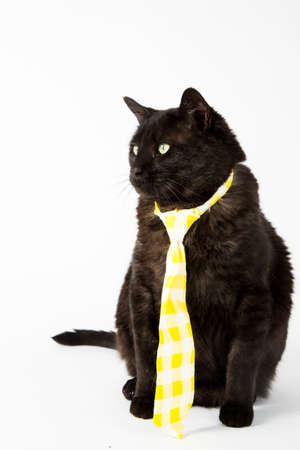 A black cat in yellow necktie on a white background.