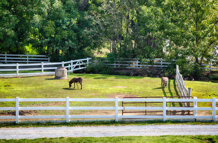 amish: A traditional Amish farm set up as a museum and tourist attraction in Lancaster County Pennsylvania