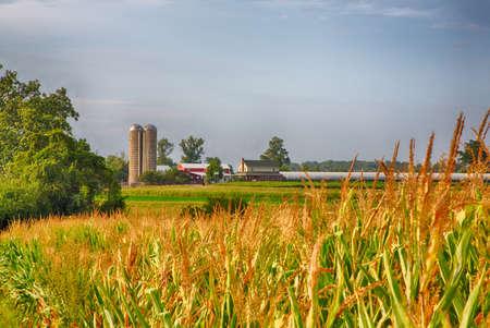 수확하는 동안 Amish Country Lancaster, Pennsylvania의 농장. 스톡 콘텐츠