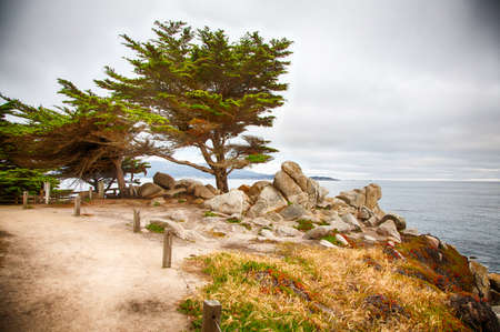 Landscape along the famous 17 Mile Drive in northern California near Carmel.