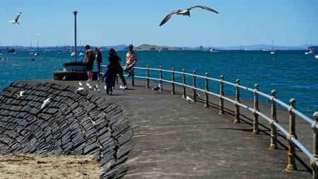 Devonport, AucklandNew Zealand - March 3, 2019: Tourists and seagulls at Devonport, Auckland, New Zealand.