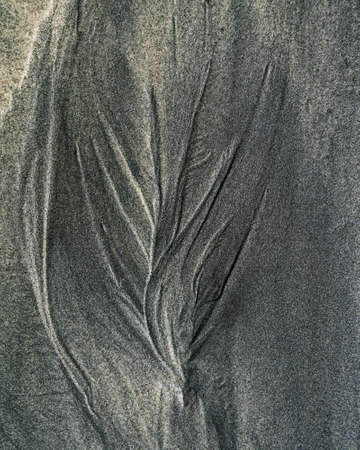 Nature's art. Black sand sculpted into a small plant by the receding tide on a beach on New Zealand's west coast. Imagens