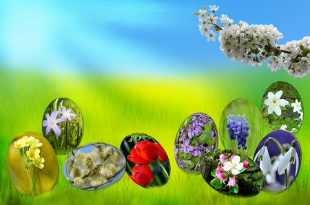 Eggs with spring flowers on a green field.