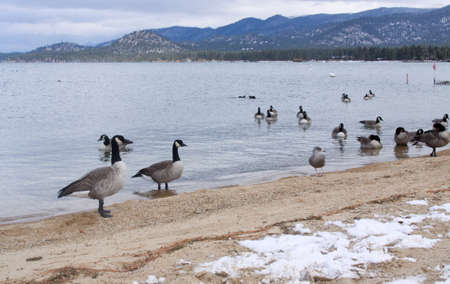 winter ducks Stock Photo - 12579638