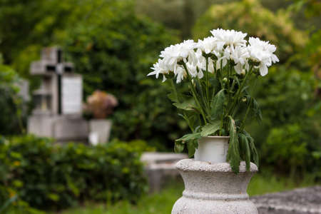 blighted: Sear white flowers in an old cemetery  Stock Photo
