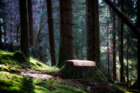 Magical morning sunlight in a forest in Baden-Wuerttemberg, Germany.