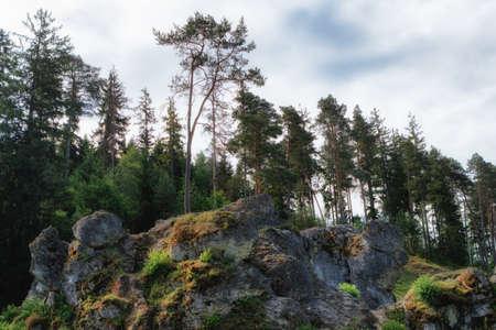 바위와 Wental (Wen Valley)에서 나무 풍경 Bartholomä, 바 덴 -Wrttemberg, 독일 근처 Swabian Alb에서 Felsenmeer. 스톡 콘텐츠 - 80425740