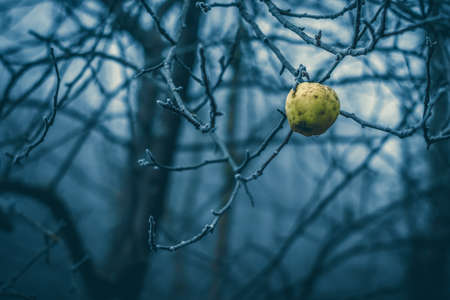 Conceptual close-up macro photo of a frozen apple at cold winter morning with copy-space. Stockfoto