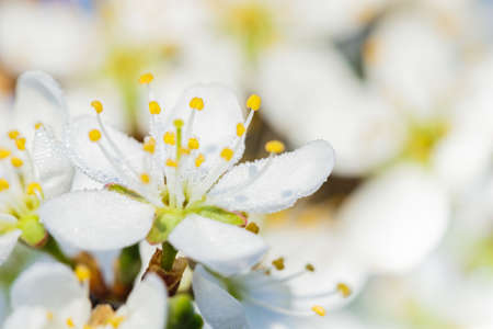 Bright spring background concept with detailed close-up white flowers. Stockfoto