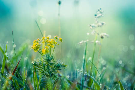 Summer meadow, green grass field and wildflowers, nature background concept, soft focus, cool, cold tones. Stockfoto
