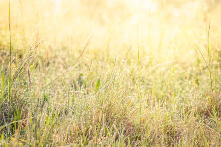 Summer meadow, green grass field in warm sunlight, nature background concept, soft focus, warm pastel tones.