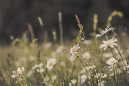 Summer meadow, green grass field and wildflowers in warm sunlight, nature background concept, soft focus, warm pastel tones.