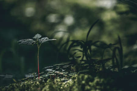 Close-up detailed photo of young plants growing from mossy ground in a dark forest. Hope, life background concept. Lots of copy space.