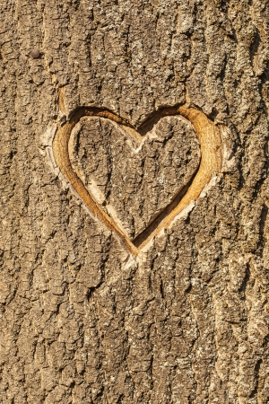 carving: Heart carved in the bark of a tree  Stock Photo