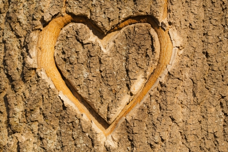 bark carving: Heart carved in the bark of a tree. Stock Photo
