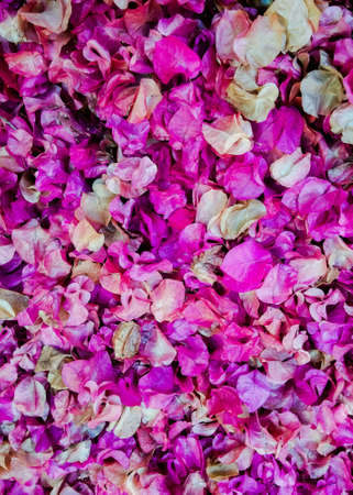 violate: Purple bedding of violate leafs  Stock Photo