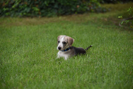litle: litle puppy sitting in the grass Stock Photo
