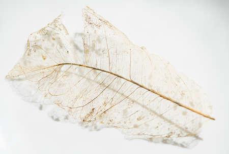 Veins  of a dry leaf Stok Fotoğraf