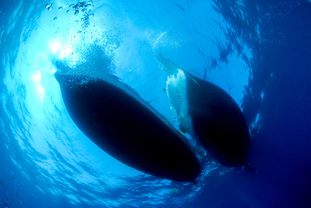 the view from below: Silhouette of two ships prom underwater. Scuba diving perspective of ship or boat