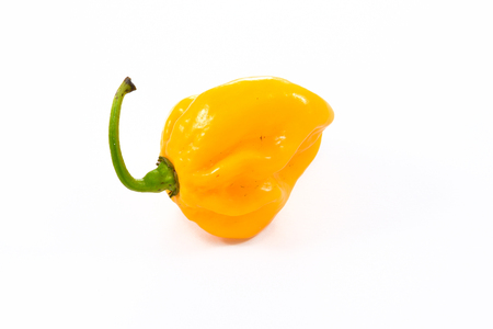 Yellow orange ripe habanero hot chili pepper from caribbean or mexico. Isolated on white