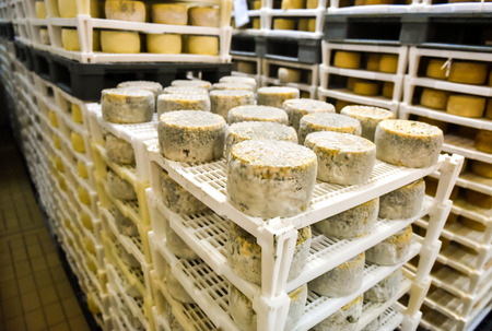 provola: Cheese factory warehouse with shelves stacked with rows of cheese. Stock Photo