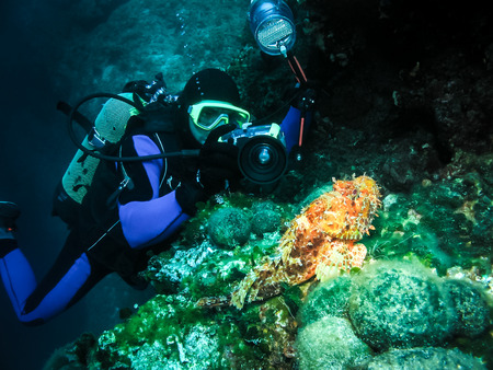 Underwater photographer is taking picture of a scorpion fish. Seascape nature ambient shot of scuba activity and wildlife. Active vacation and nature conservation. Imagens