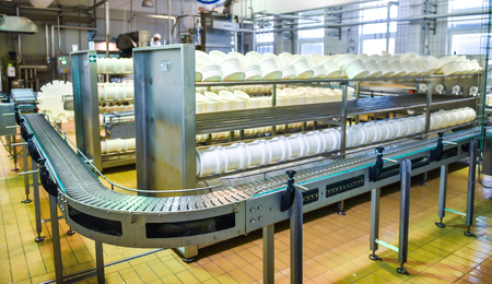 food plant: Conveyor belt in a cheese factory with a plastic cheese molds
