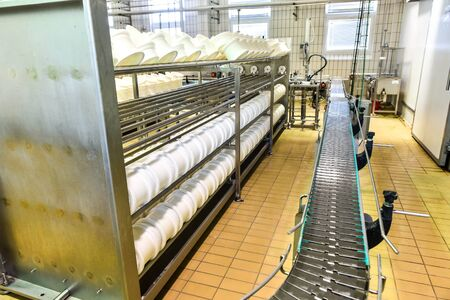 provola: Conveyor belt in a cheese factory with a plastic cheese molds