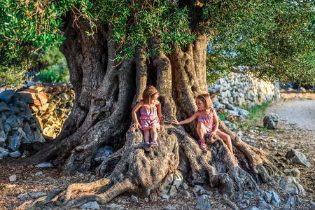 小さな双子の女の子が座って、古代古いオリーブの木。