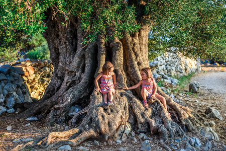 Little Twin Girls are sitting and ancient old olive tree. Imagens