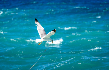 sea bird: Seagull is flying and soaring over blue sea. Sea bird in blue skies over the ocean. Stock Photo