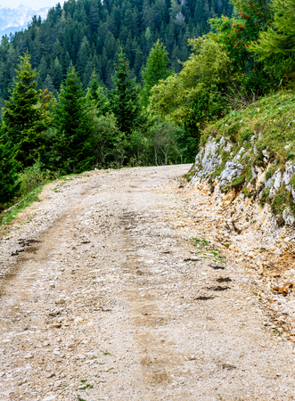 Forrest path or mountain road trail with trees in background. Macadam road in the hill s with green pine trees on both sides is slowly descending. Stock Photo