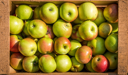 Texture pattern of fresh organic apples in wooden crate. Crates and baskets of freshly harvested organic apples in an apple orchard. Summer or fall harvest of apples.